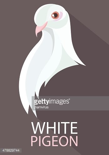 Pigeon vector flat design