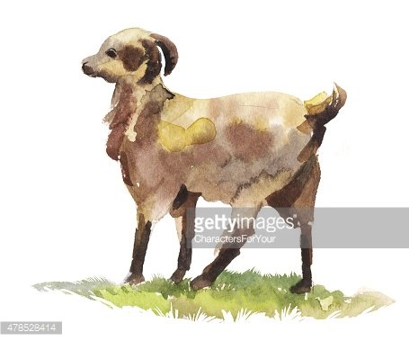 watercolor illustration with a goat in profile