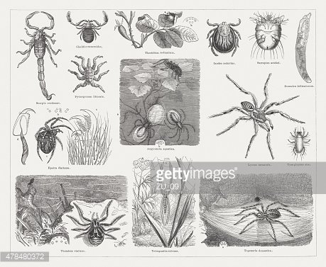 Spiders, wood engravings, published in 1878