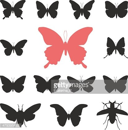 butterflies, cicada set isolated silhouette on white background. Vector