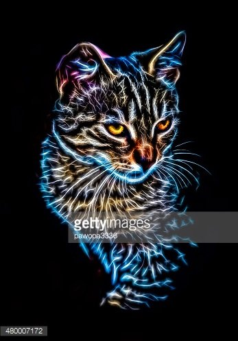 Glowing cat portrait