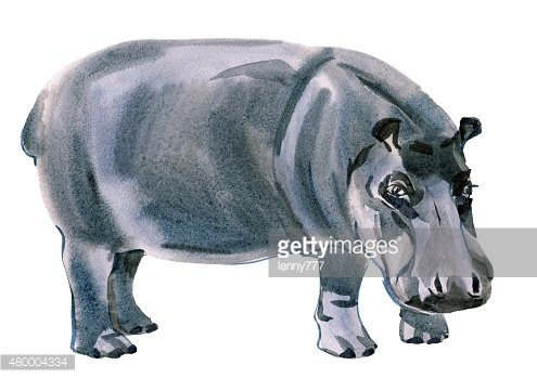 Watercolor illustration of Rhino in white background.