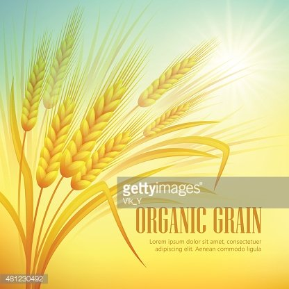 Vector Illustration Of A Beautiful Autumn Scene With Wheat Fields Royalty  Free Cliparts, Vectors, And Stock Illustration. Image 44352006.