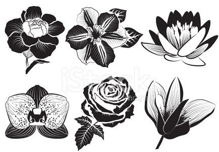 Line Art Rose Flower : Abstract black and white rose in outline drawing style stock