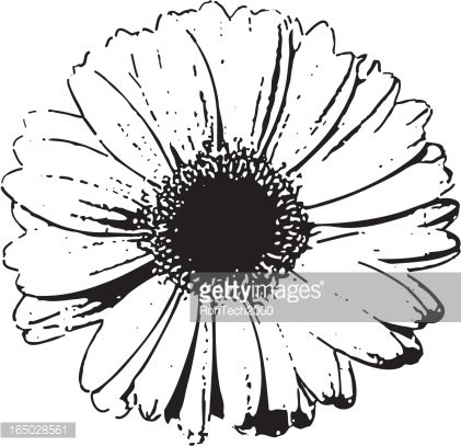 Daisy Outline Drawing | Free Images at Clker.com - vector clip art online,  royalty free & public domain