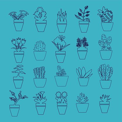 Vector set of house plants in pots