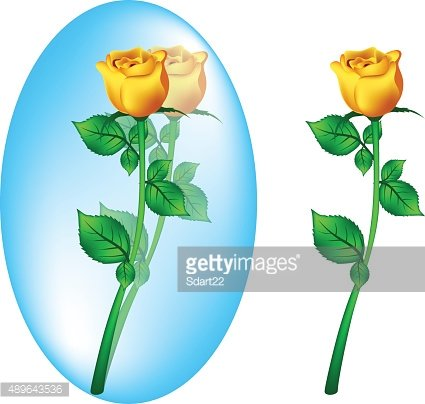Yellow rose vector disign