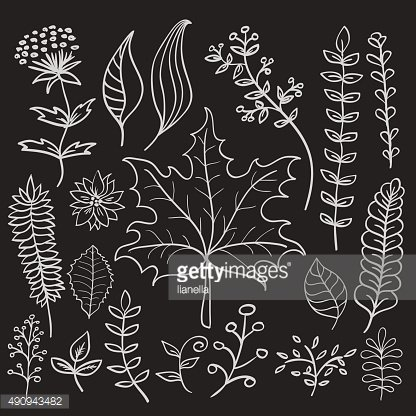 Hand drawn doodle vector leaves set