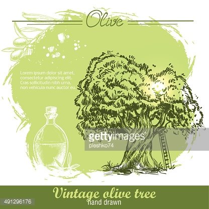 Vintage hand drawn olive tree and olive oil botlle