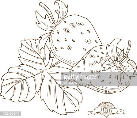 Vector illustration Outline hand drawn strawberry