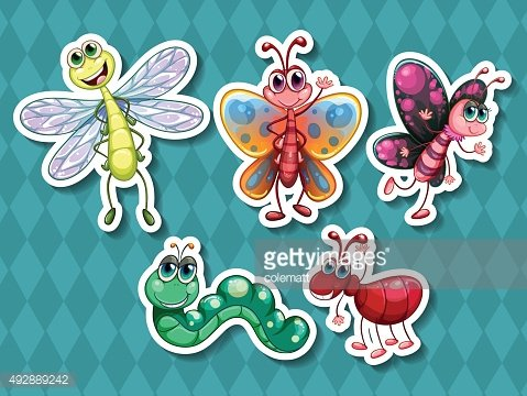 Different kind insects