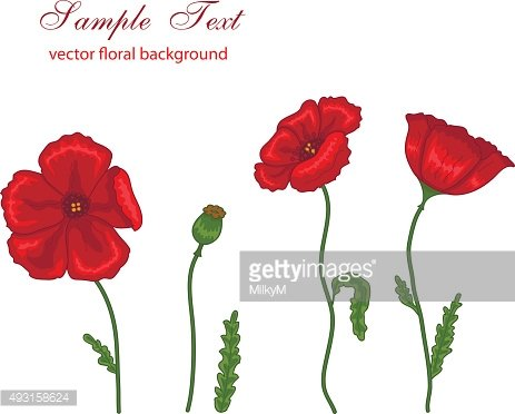 Vector illustration of red poppies