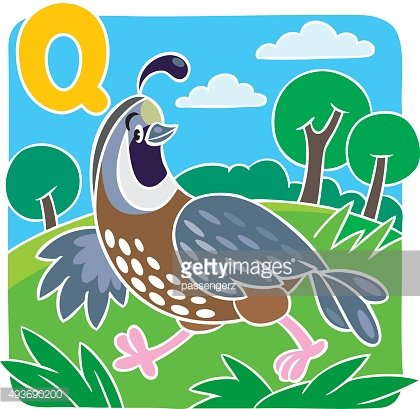 Little quail. Alphabet Q