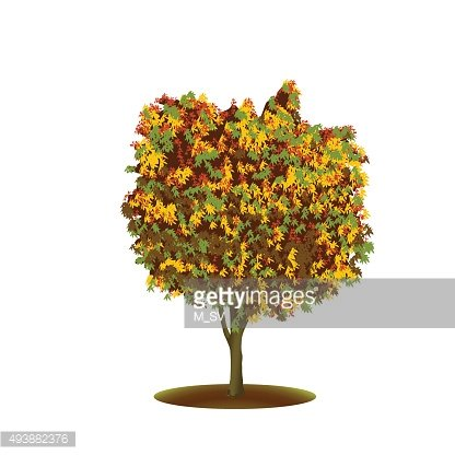 ficus tree with yellow leaves