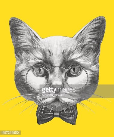 Portrait of Cat with glasses and bow tie.