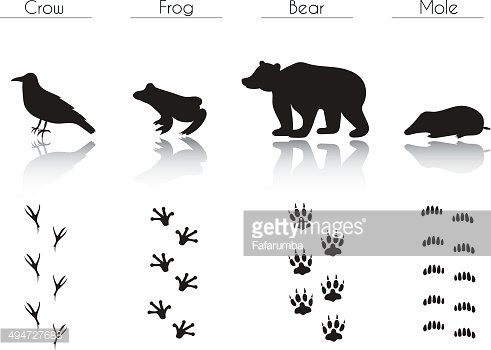 Set of Forest Animals and Birds Silhouettes: Crow, Frog, B