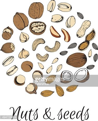 Nuts collection drawings. Sketches.