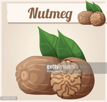 Nutmeg. Detailed Vector Icon