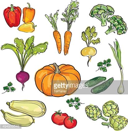 Vegetable set. Hand drawn wtercolor food ingredient collection.