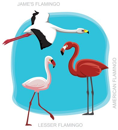Vogel-Flamingo Set Cartoon-Vektor-Illustration