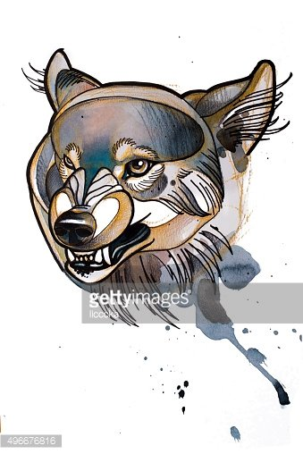 drawing head of the wolf
