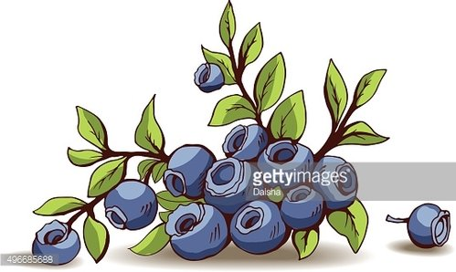Blueberry with shadow isolated