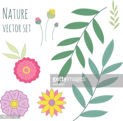 Vector floral set. Collection with leaves and flowers