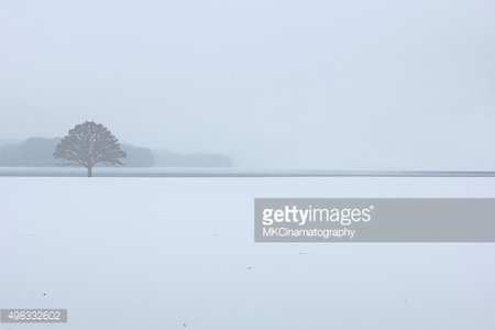 Winter snow tree vector design paint photography