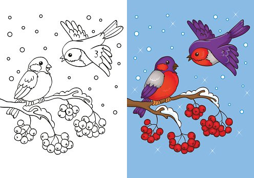 Coloring Book Of Bullfinches Sitting On Branch Clipart Image