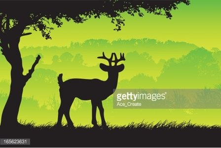 Deer in the country silhouette