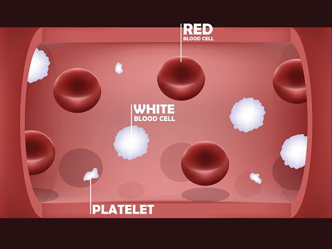 graphic design of blood system