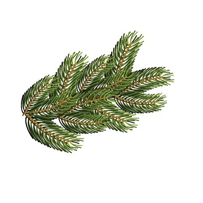 Spruce branch on white background. Christmas tree branch to desi