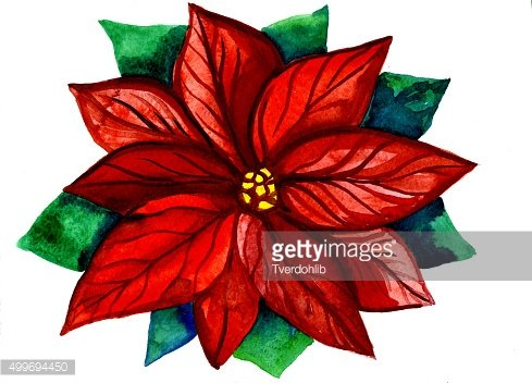 Christmas Poinsettia Clipart png download - 600*533 - Free Transparent  Poinsettia png Download. - CleanPNG / KissPNG
