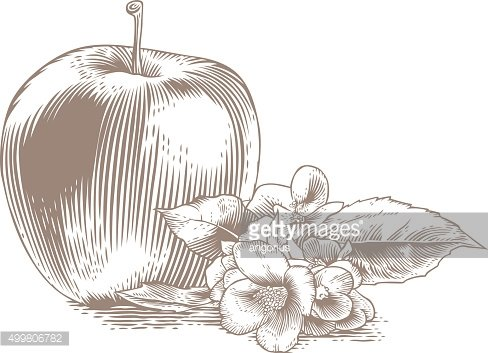 Apple with flower and leaves