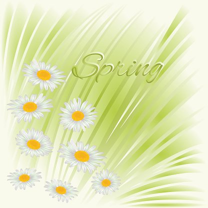 Spring daisies green background vector