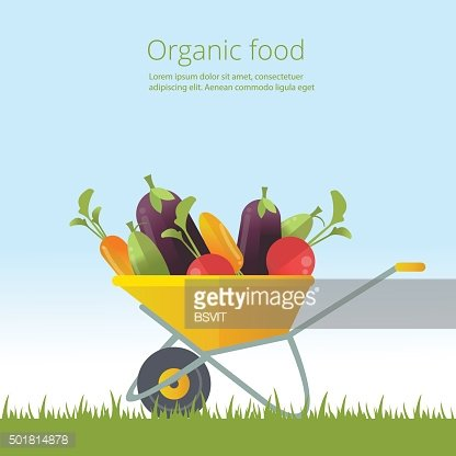 Organic vegetables concept. Wheelbarrow with fresh vegetables. Organic cultivation of ...