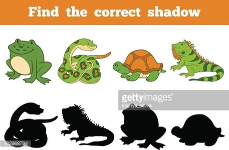 Find the correct shadow (snake, turtle, iguana, frog)