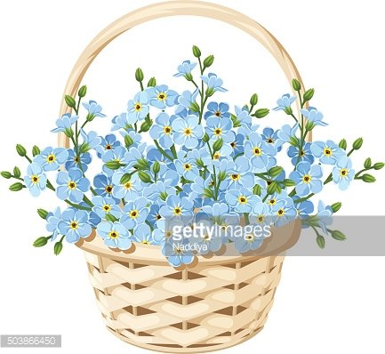 Basket with blue forget-me-not flowers. Vector illustration.