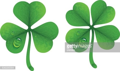 Clover leaves with drops of dew. Lucky Clover leaf