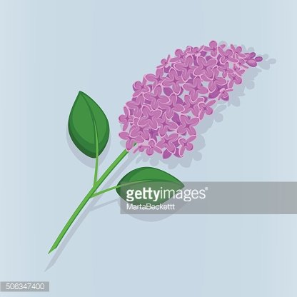 The beautiful branch of blooming lilacs on blue background