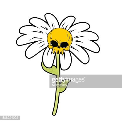 Flower of death. Chamomile with skull. Head skeleton with white