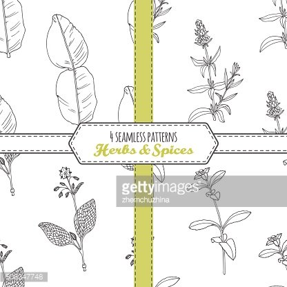 Hand drawn seamless patterns collection with kaffir lime, borage, hyssop