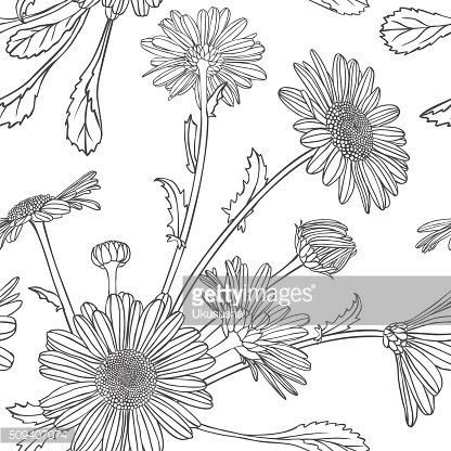 Linear seamless pattern - chamomile flowers