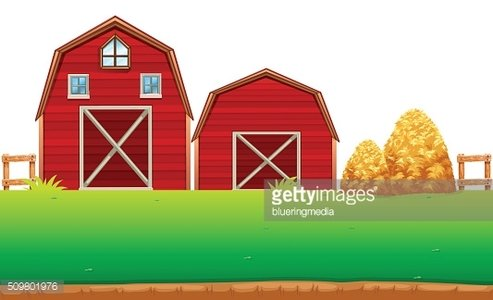 Red barns on the farm