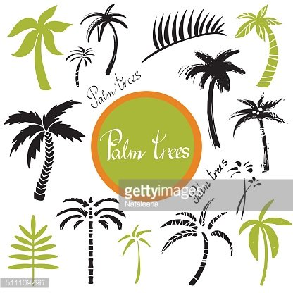 Tropical palm trees and leaves