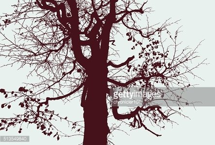 silhouette of a tree in the fall