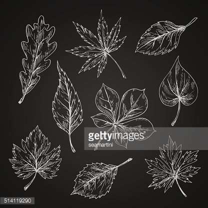 Chalk sketches of leaves silhouettes