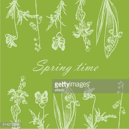 background card sketch hand drawn forest grass and flowers
