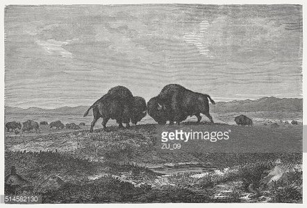 Buffalo herd on the prairie, wod engraving, published in 1880