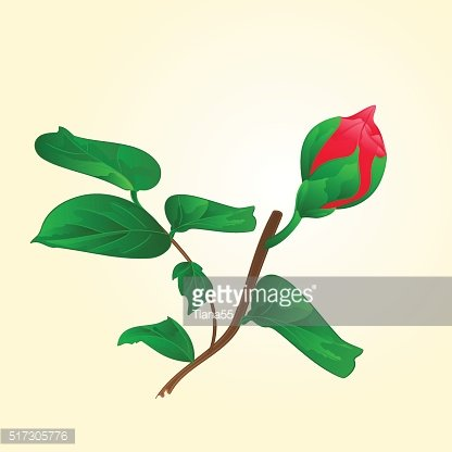 Bud of red flower vector